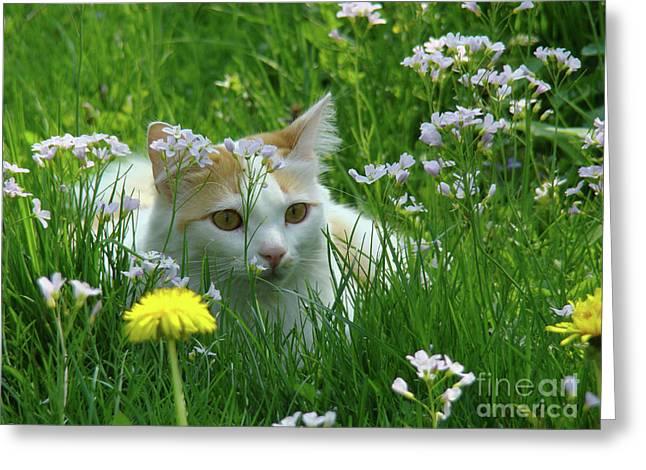 Flower Cat Greeting Card by Bruno Santoro