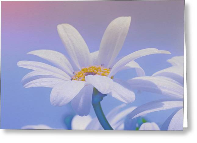 Flower For You Greeting Card by Jutta Maria Pusl