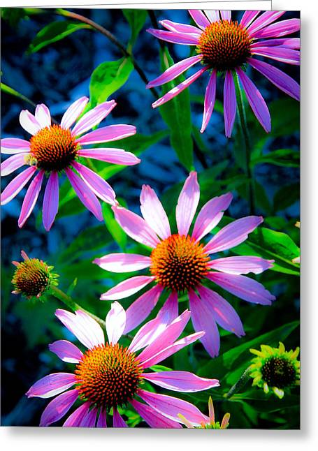 Abstracted Coneflowers Greeting Cards - Flower Fusion Greeting Card by Steve McKinzie