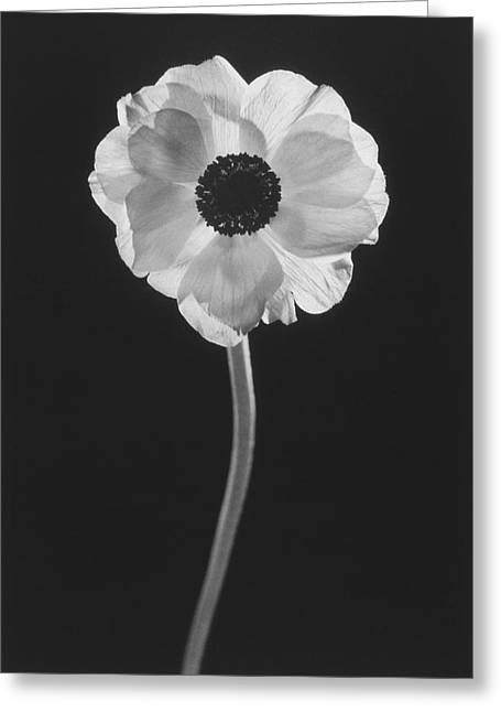 Stigma Greeting Cards - Flower Greeting Card by Graeme Harris