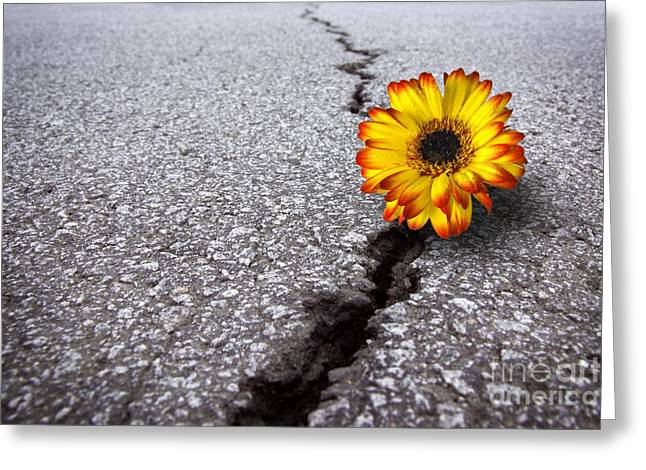 Cracked Photographs Greeting Cards - Flower in asphalt Greeting Card by Carlos Caetano