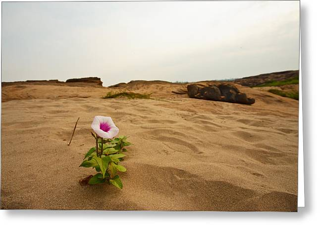 Burned Clay Greeting Cards - Flower in desert Greeting Card by Panya Jampatong