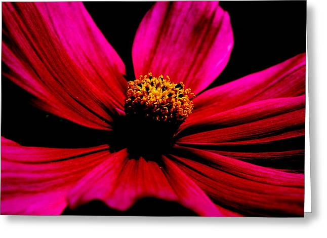 Petals Framed Prints Greeting Cards - Flower in Red Greeting Card by Tam Graff