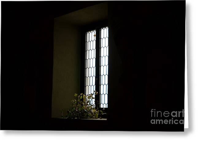 Illuminate Greeting Cards - Flower in the window Greeting Card by Mats Silvan