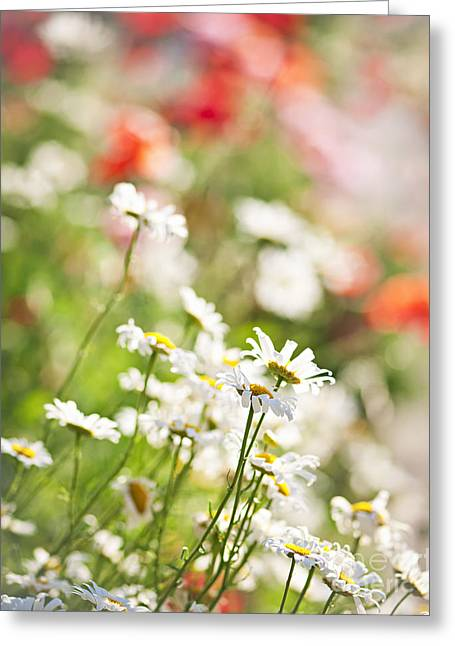 Chamomile Greeting Cards - Flower meadow Greeting Card by Elena Elisseeva