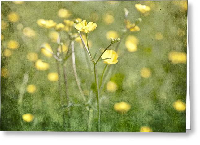 Texture Flower Greeting Cards - Flower of a buttercup in a sea of yellow flowers Greeting Card by Joana Kruse