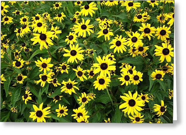Sunflower Patch Greeting Cards - Flower patch Greeting Card by Timothy Jones