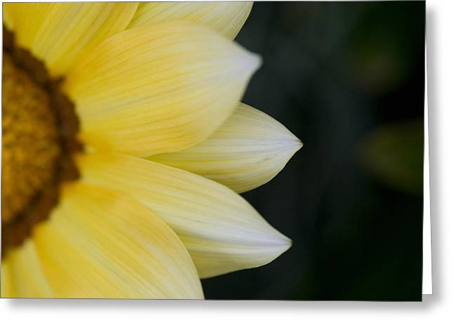Out Of The Woods Greeting Cards - Flower Petals Greeting Card by Keith Levit