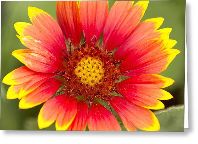 Flower Power Greeting Card by Daphne Sampson