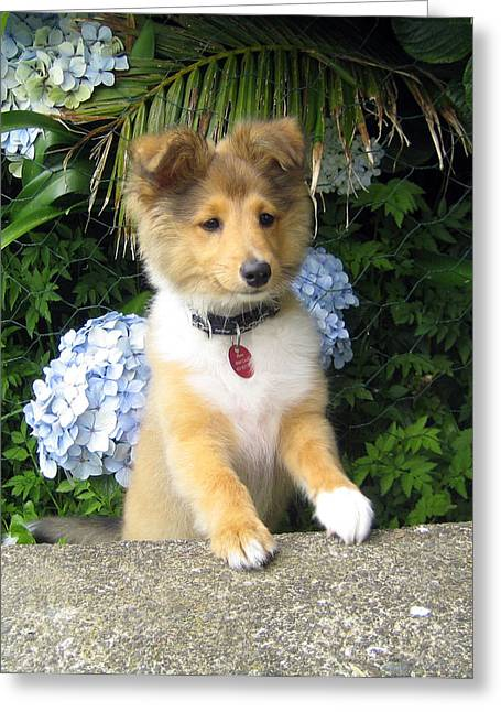 Puppies Photographs Greeting Cards - Flower Puppy Greeting Card by Sheltie Planet