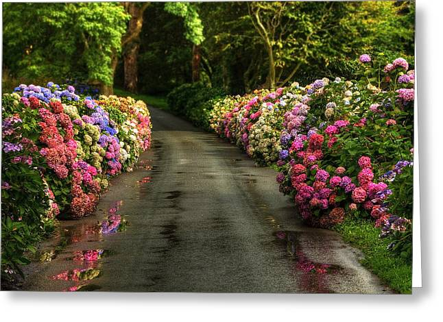Flower Road Greeting Card by Svetlana Sewell