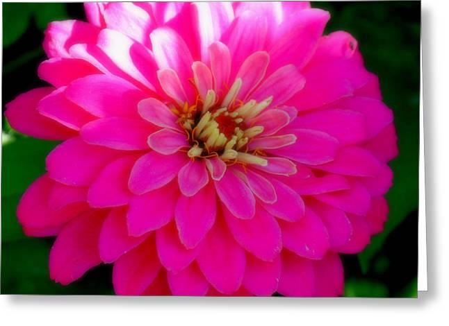 Shweta Singh Greeting Cards - Flower Greeting Card by Shweta Singh