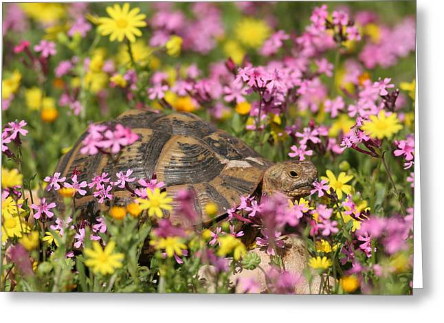 Flower Photos Pyrography Greeting Cards - flowering Around turtle Greeting Card by Alon Meir