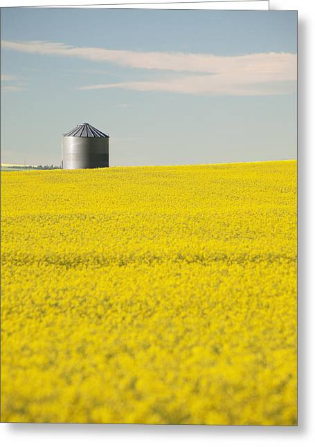 Grain Bin Greeting Cards - Flowering Canola With Grain Bins In The Greeting Card by Michael Interisano