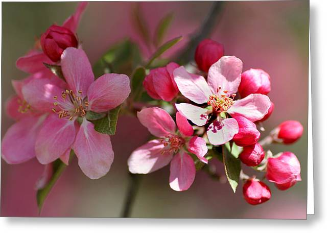 Beauty Mark Greeting Cards - Flowering Crabapple Detail Greeting Card by Mark J Seefeldt