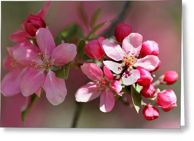 Flowering Crabapple Detail Greeting Card by Mark J Seefeldt