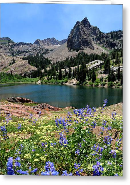 Blanche Greeting Cards - Flowering Lake Blanche - Wasatch Mountains Greeting Card by Gary Whitton