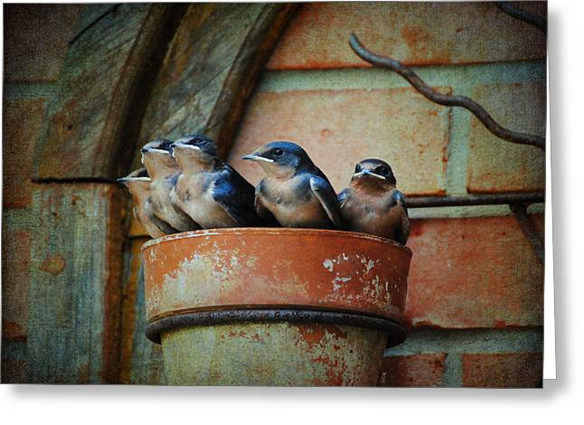 Baby Swallows Greeting Cards - Flowerpot Swallows Greeting Card by Jai Johnson