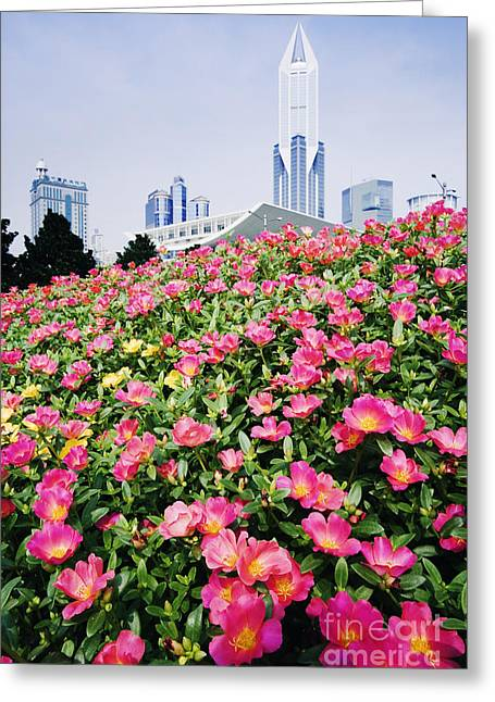 Office Space Photographs Greeting Cards - Flowers and Architecture around Peoples Square Greeting Card by Jeremy Woodhouse