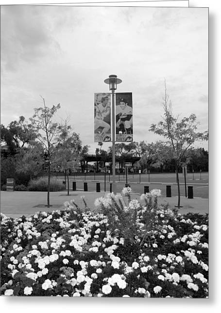 Yogi Berra Greeting Cards - FLOWERS AT CITI FIELD in BLACK AND WHITE Greeting Card by Rob Hans