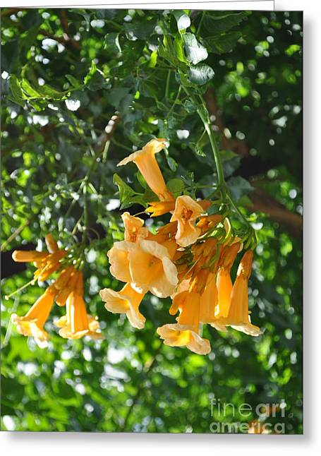 Best Sellers -  - Cheekwood Greeting Cards - Flowers  Greeting Card by Denise Ellis