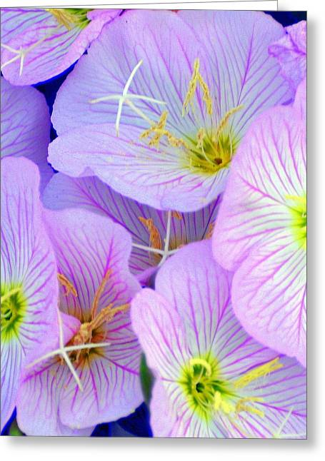 Flowers Flowers Greeting Card by Marty Koch