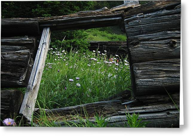 Cabin Window Greeting Cards - Flowers in a Cabin Greeting Card by Matthew Parks