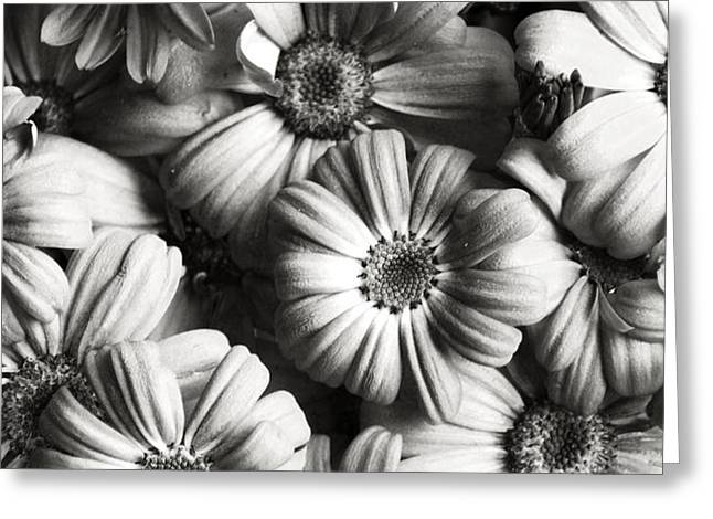 Monochrome Greeting Cards - Flowers In Sepia Tone Greeting Card by Sumit Mehndiratta