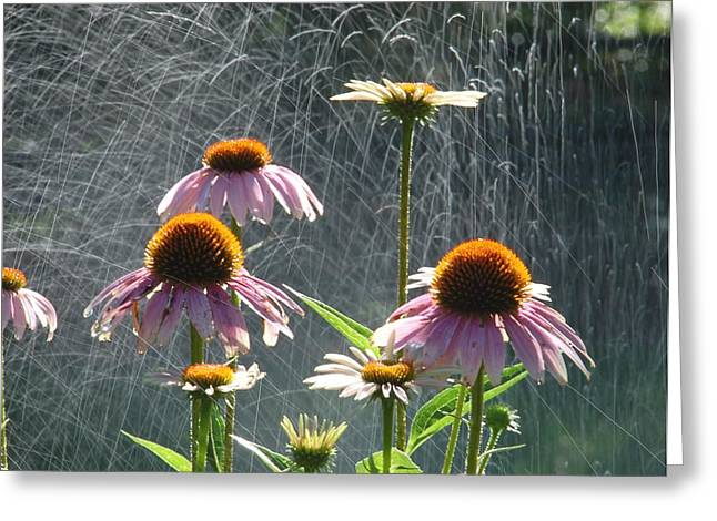 Randy J Heath Greeting Cards - Flowers in the Rain Greeting Card by Randy J Heath