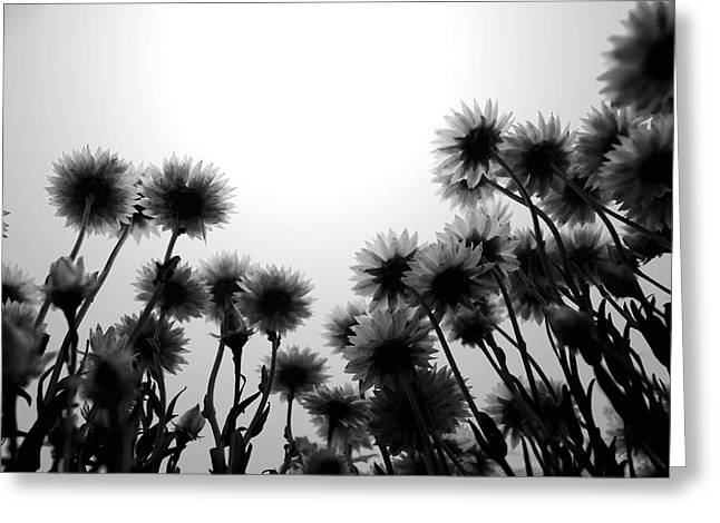 Monochromatic Greeting Cards - Flowers Standing Tall Greeting Card by Sumit Mehndiratta