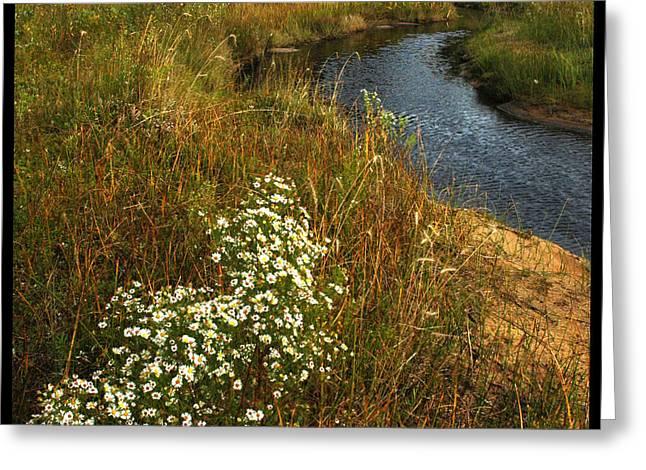 Beach Greeting Cards - Flowing Daisy Flowing Creek Greeting Card by LeeAnn McLaneGoetz McLaneGoetzStudioLLCcom