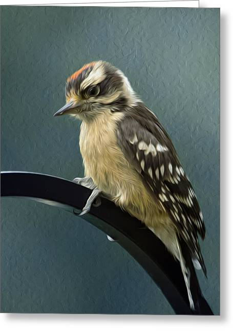 Hairy Woodpecker Greeting Cards - Flowing Downy Woodpecker Greeting Card by Bill Tiepelman