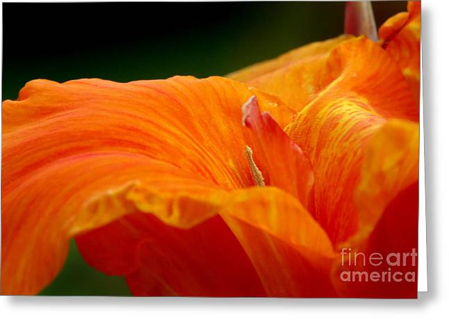 Canna Greeting Cards - Flowing Greeting Card by Jeannie Burleson