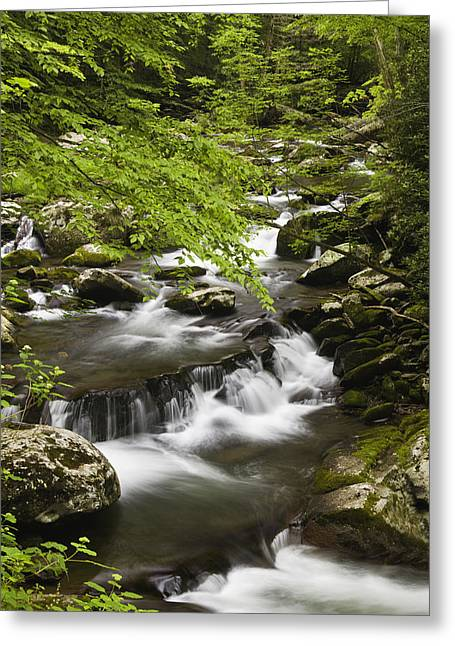 Rapids Greeting Cards - Flowing Mountain Stream Greeting Card by Andrew Soundarajan