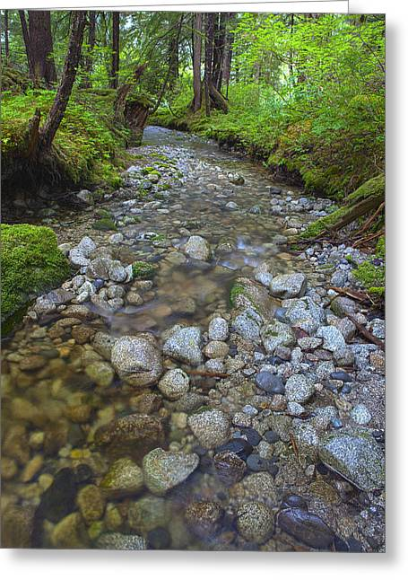 Prints Of Alaska Greeting Cards - Flowing through the Forest Greeting Card by Tim Grams
