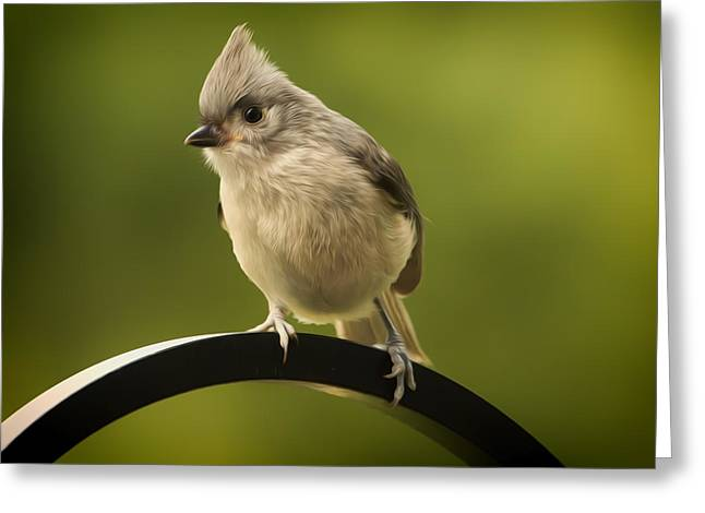 Tufted Titmouse Greeting Cards - Flowing Tufted Titmouse Greeting Card by Bill Tiepelman