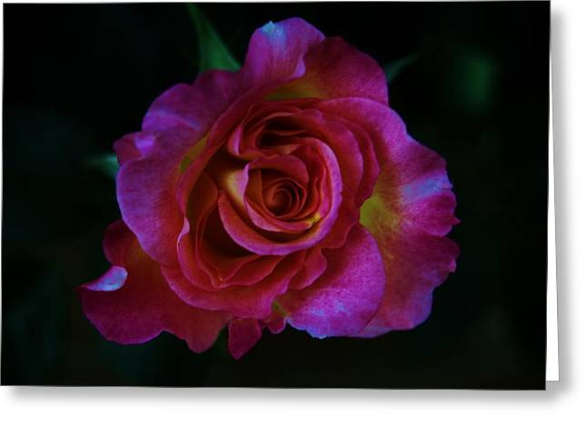 Rosebush Greeting Cards - Fluorescence Greeting Card by Helen Carson
