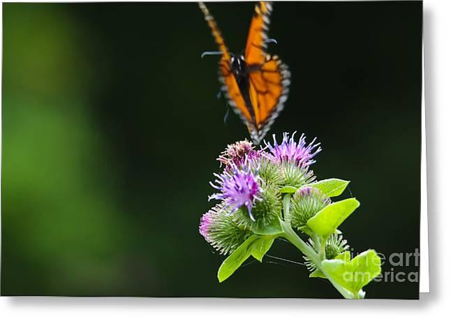 Fluttering Away... Greeting Card by Christine Kapler
