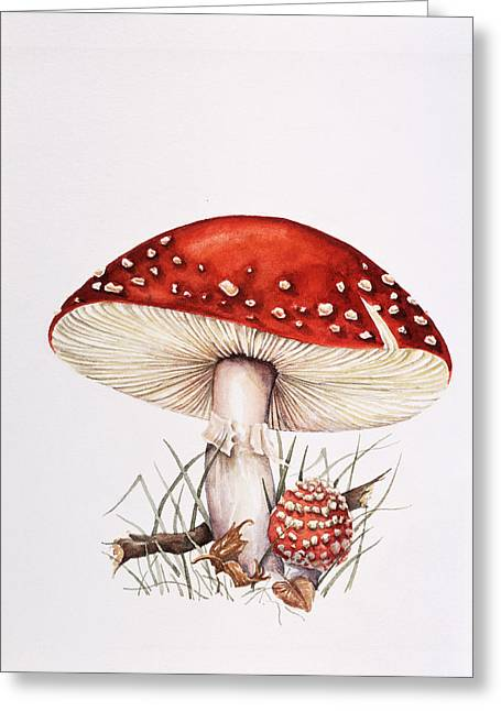 Fungal Greeting Cards - Fly Agaric Mushrooms Greeting Card by Lizzie Harper