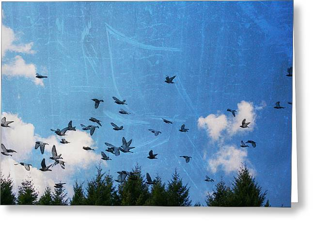 Firmament Greeting Cards - Fly Away Greeting Card by Nomad Art And  Design