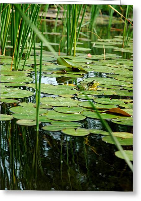 Water Lilly Greeting Cards - Fly beware Greeting Card by LeeAnn McLaneGoetz McLaneGoetzStudioLLCcom
