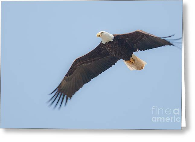 Flying Eagles Greeting Cards - Fly Bye Greeting Card by Naman Imagery