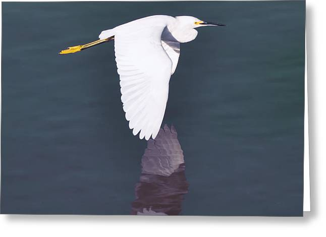Water Fowl Greeting Cards - Fly Egret Fly Greeting Card by Bill Cannon