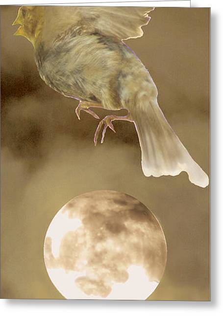 Bird Photographs Greeting Cards - Fly me to the moon Greeting Card by Jim Wright