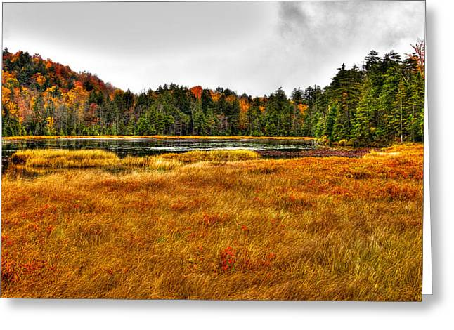 Fir Trees Greeting Cards - Fly Pond on Rondaxe Road Greeting Card by David Patterson
