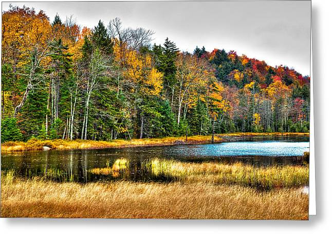 Fir Trees Greeting Cards - Fly Pond on Rondaxe Road II Greeting Card by David Patterson