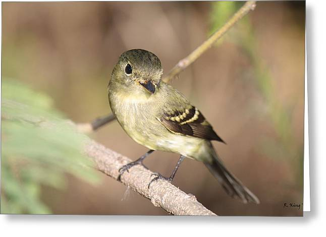 Secretive Birds Greeting Cards - Flycatcher On A Branch Greeting Card by Roena King