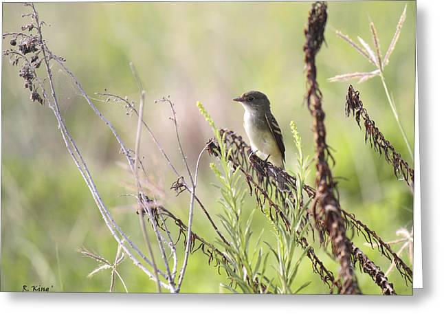 Secretive Birds Greeting Cards - Flycatcher On A Twig Greeting Card by Roena King
