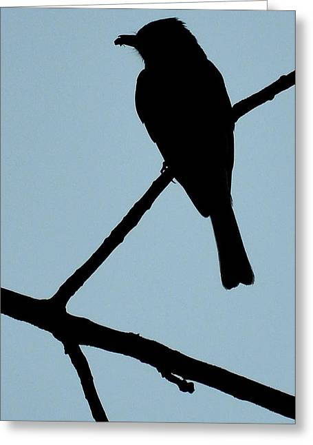 Birds Pyrography Greeting Cards - Flycatcher with Bug Greeting Card by Jeffrey Platt