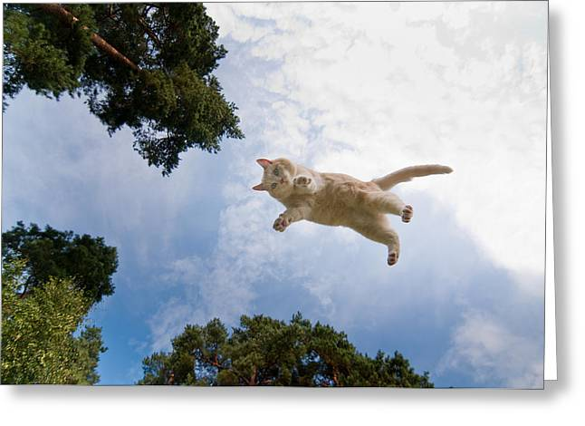 Greeting Cards - Flying cat Greeting Card by Micael  Carlsson